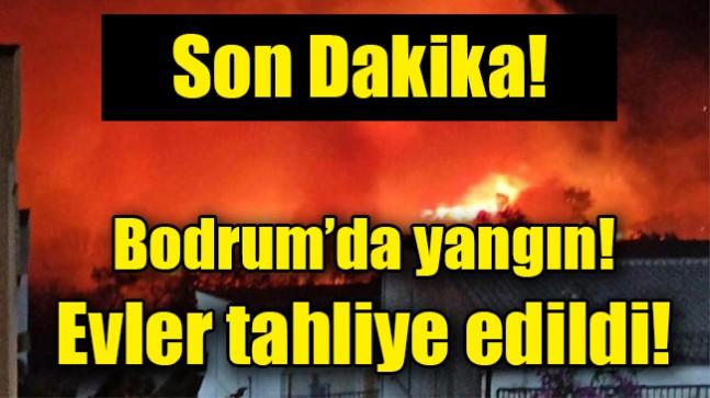 Bodrum'da  yangın! Evler tahliye edildi